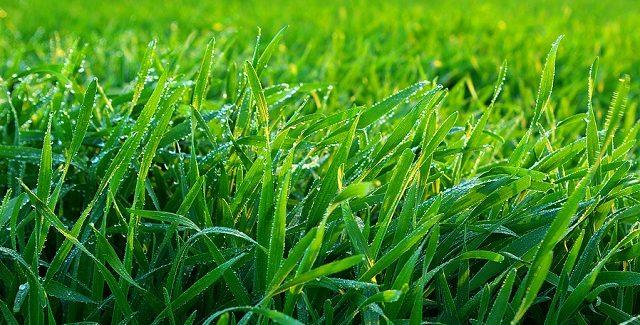 Få Danmarks smukkeste græsplæne, nemt!