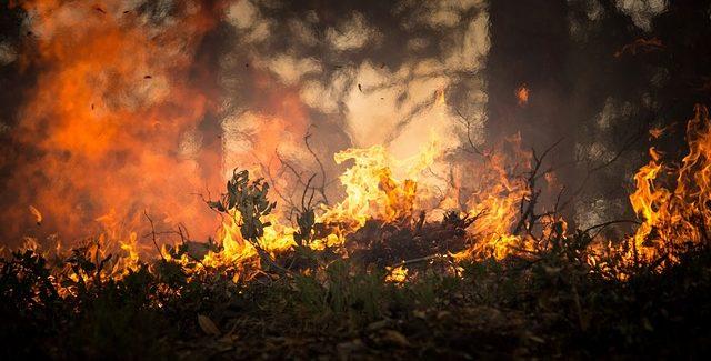 Afbrændingsforbud – Du må GERNE grille!